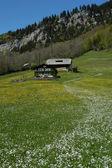 Belleza de suiza — Foto de Stock