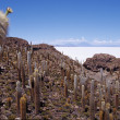 Pescado island on Santa de Ayes National Park, Salar de Uyuni Bolivia — Stock Photo