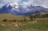 Torres del paine national park — Foto de Stock