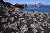 Boş kumsalda güzel: galapagos — Stok fotoğraf