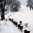 Winter in Village of Cimadera on Val Colla valley - Stock Photo