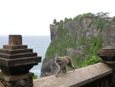 Monkey at the temple of Uluwatu on the island of Bali, Indonesia — Stock Photo