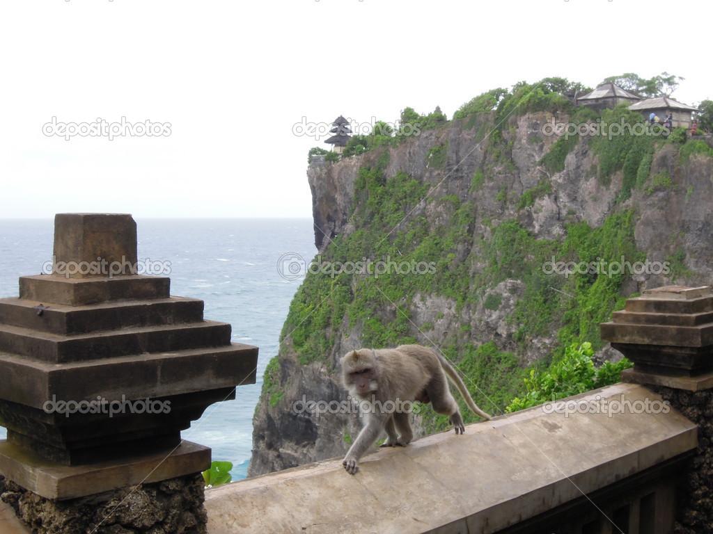 猴子在印度尼西亚巴厘岛乌鲁瓦图寺