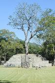 As ruínas maias — Fotografia Stock