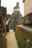 The Mayan ruins of Tikal — Stock Photo