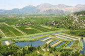 Agricultural crops along the river Neretvi — ストック写真