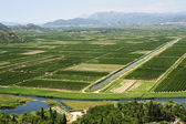 Agricultural crops along the river Neretvi — Foto de Stock