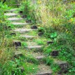 Wooden stairs in forest overgrown with plants. — Stock Photo #19154777
