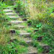 Stock Photo: Wooden stairs in forest overgrown with plants.