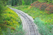 Railway tracks in forest curving left. — Stock Photo