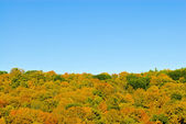 Autumn forest on blue sky — Stock Photo