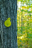 Trail marker on tree — Stock Photo