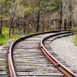 Train tracks curving right into trees. — Stock Photo #50213135
