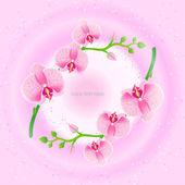 Illustration of frame with pink orchids — Cтоковый вектор