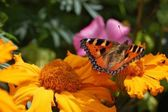 花を蝶します。 — Stock fotografie