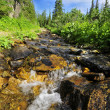 River in taiga forest — Stock Photo