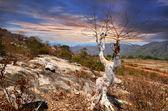 Tree against the rocky slopes — Stock Photo