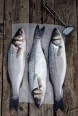 Sea bass — Foto Stock