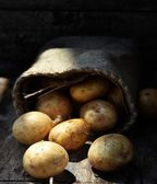 Sack fresh organic potatoes — Stock Photo