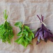 Stock Photo: Sweet herbs