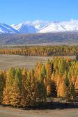 Altaj — Stockfoto