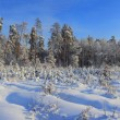 Winter Landscape — Stock Photo #14153027