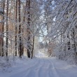 Winter Landscape — Stock Photo #14153030