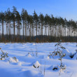 Winter Landscape — Stock Photo #14171967