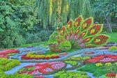 Květinová přehlídka — Stock fotografie