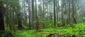 Hoh Rain Forest — Stock Photo