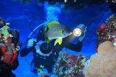 紅海の海洋生物 — ストック写真