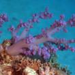 Marine Life in the Red Sea — Stockfoto