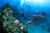 Marine Life in the Red Sea — Stock Photo