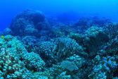 Vita marina nel mar rosso — Foto Stock
