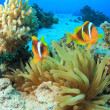 Stock Photo: Marine Life in Red Sea
