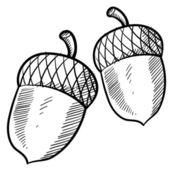 Acorn or buckeye sketch — Stock Vector