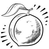 Peach fruit sketch — Stock Vector