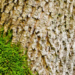 Moss on tree bark close-up. nature background — Foto de Stock