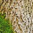 Moss on tree bark close-up. nature background — Stock Photo