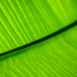 Green palm leaf texture background — Stock fotografie