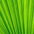 Stock Photo: Tropical leaf texture background