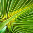 Tropical leaf texture background — Stock Photo #14327789