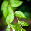 Water drops on fresh green leaves background — Stock Photo #14329571