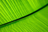 Green palm leaf texture background — Stock Photo