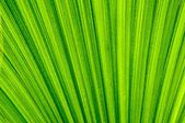 Tropical leaf texture background — Stock Photo