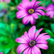 Purple flowers background — Stockfoto