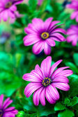 Purple flowers background — Stock Photo