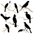 Birds silhouette set. Vector. — Vector de stock #22362379