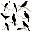 Birds silhouette set. Vector. - Stock vektor