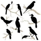 鸟剪影集。矢量. — 图库矢量图片